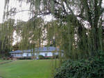 House With Weeping Willow by Melanie Young
