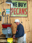 Cracking Pecans, Frisco City Pecan House by Mary Amelia Taylor
