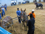 Mule Pull, Mississippi State Fair by Eric Griffis