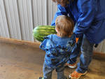 Big Melon [BTC Grocery] by Rachael Walker